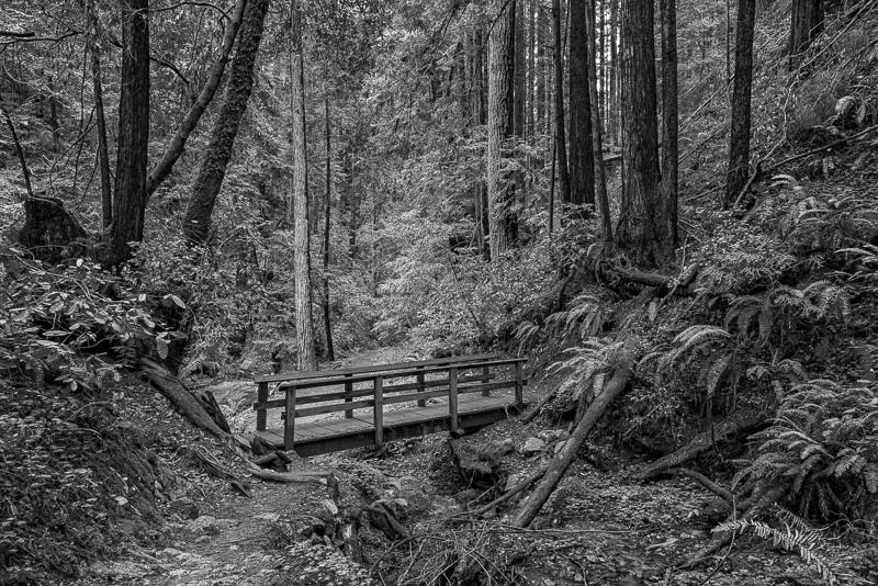 Bridge in the Woods #01