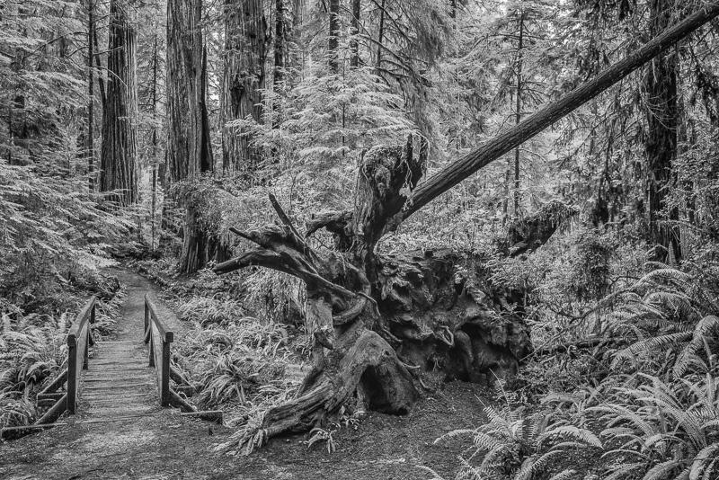 Bridge in the Woods #02