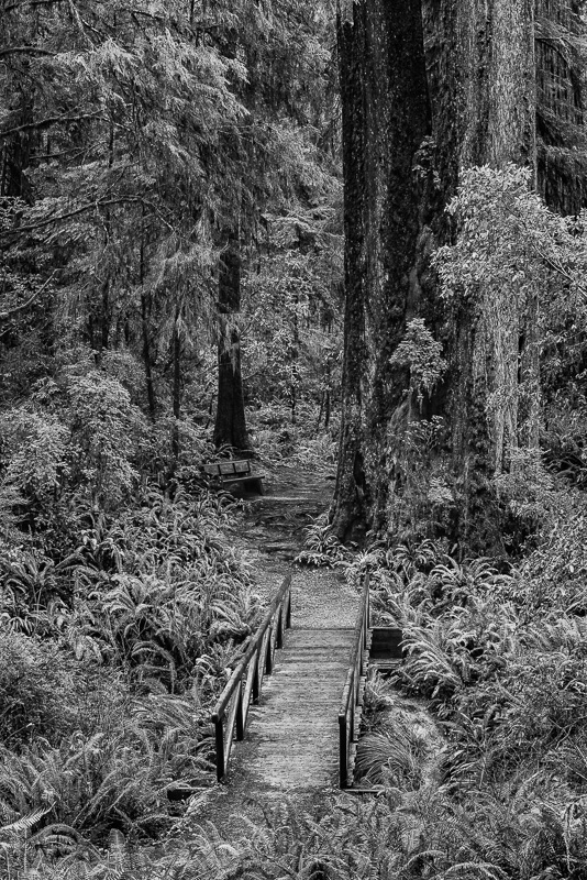 Bridge in the Woods #03
