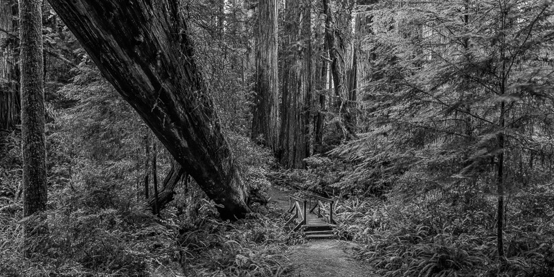 Bridge in the Woods #04