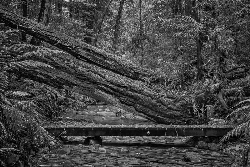 Bridge in the Woods #06